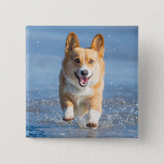 Pembroke Welsh Corgi Dog Running On The Beach Button
