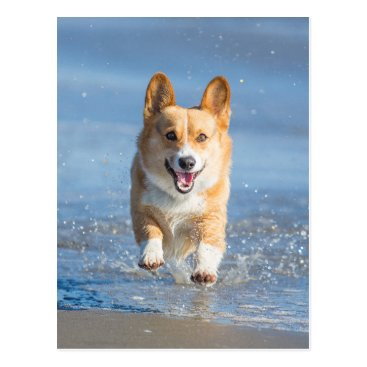 Beach Themed Pembroke Welsh Corgi Dog Running On The Beach Postcard