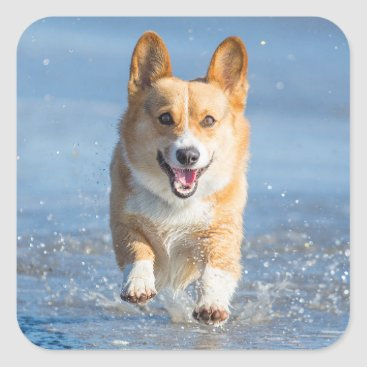 Beach Themed Pembroke Welsh Corgi Dog Running On The Beach Square Sticker
