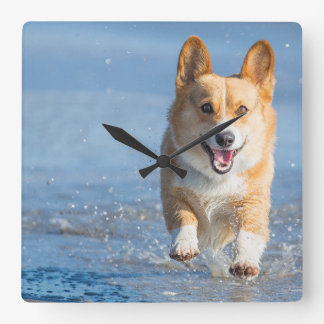 Pembroke Welsh Corgi Dog Running On The Beach Square Wall Clock