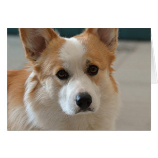 pembroke welsh corgi face card