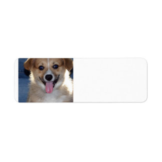 pembroke welsh corgi puppy.png label