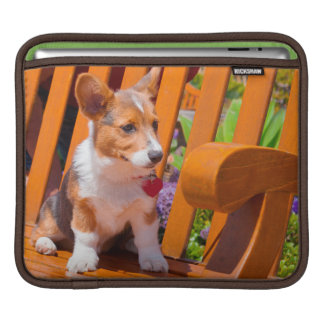 Pembroke Welsh Corgi puppy sitting in park bench Sleeve For iPads
