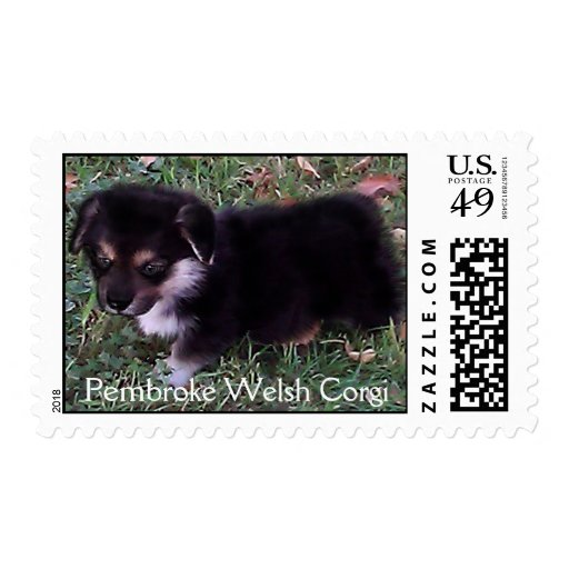 Pembroke Welsh Corgi Puppy Stamp