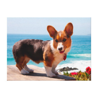 Pembroke Welsh Corgi puppy standing on table Canvas Print