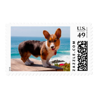 Pembroke Welsh Corgi puppy standing on table Postage Stamp