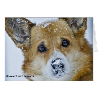 PEMBROKE WELSH CORGI SNOW NOSE CARD