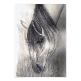 Pencil Drawing - Horse Grazing Card