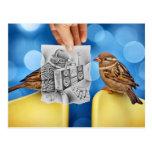 Pencil Vs Camera - Electro Bird Post Cards