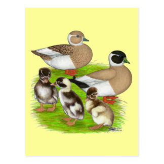 Penciled Call Duck Family Postcard
