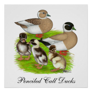 Penciled Call Duck Family Poster