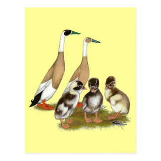 Penciled Runner Duck Family Postcard