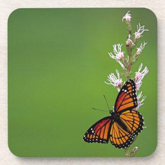 Pendiente de la mariposa de monarca posavasos de bebidas