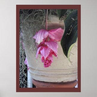 Pendulous Pink Flowers - Artistic Poster