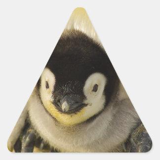 Penguin Baby Antarctic Life Animal Emperor Cute Triangle Sticker