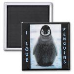 Penguin Baby Penguin-lover Fine Art Magnet
