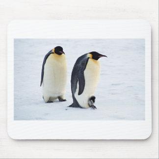Penguin Bird Animal Ice Frozen Winter Mouse Pad