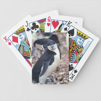 Penguin Bird Cute Animal Black White Water Bicycle Playing Cards