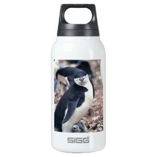 Penguin Bird Cute Animal Black White Water Insulated Water Bottle