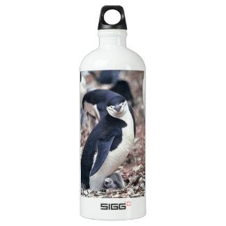 Penguin Bird Cute Animal Black White Water Water Bottle