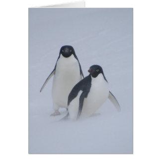 Penguin Blizzard Card