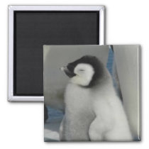 Penguin Chick Magnet