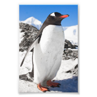 Penguin Closeup Photo Print
