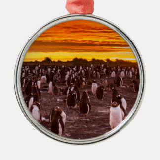 Penguin colony at sunset, Falkland Metal Ornament