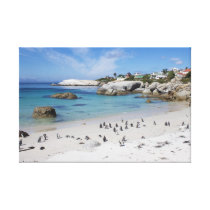Penguin Colony on Boulders Beach Canvas Print
