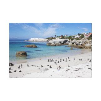 Penguin Colony on Boulders Beach Canvas Print