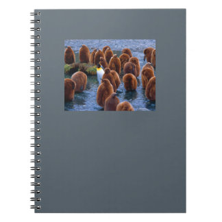 Penguin Day Care note pad Notebook