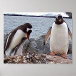 Penguin Family Portrait Posters