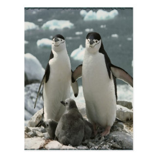 Penguin Family Postcard