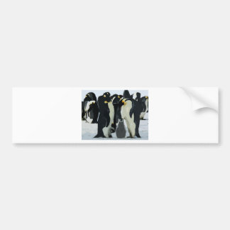 Penguin family with chick bumper sticker