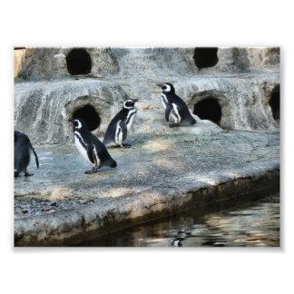 Penguin Flock Photo Art