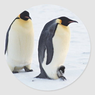 Penguin frozen ice snow bird weather cute animals classic round sticker