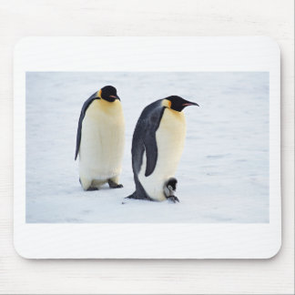 Penguin frozen ice snow bird weather cute animals mouse pad