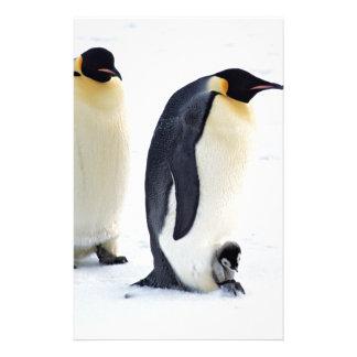 Penguin frozen ice snow bird weather cute animals stationery