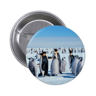 Penguin Gathering Pin