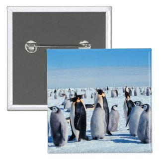 Penguin Gathering Pinback Button