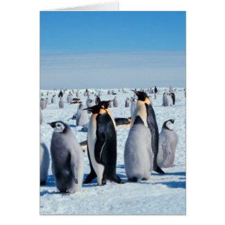 Penguin Gathering Card
