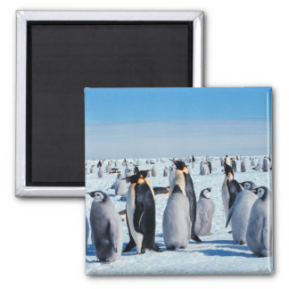 Penguin Gathering Fridge Magnets