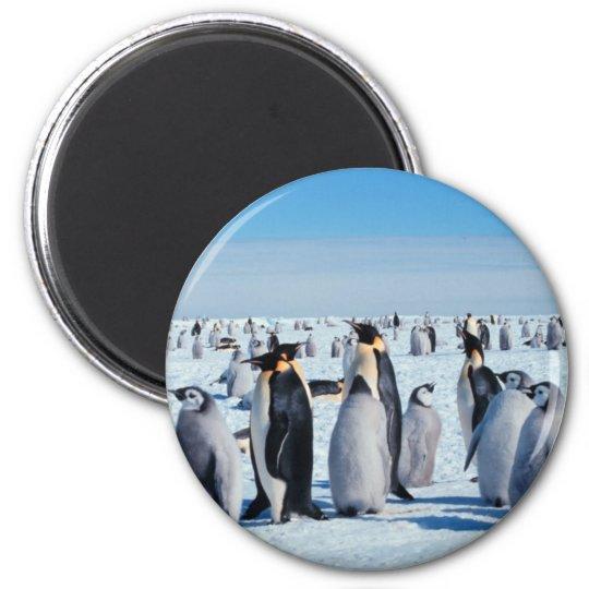 Penguin Gathering Magnet