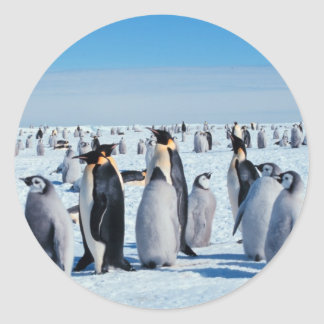 Penguin Gathering Classic Round Sticker