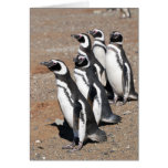 Penguin Happy Birthday Wishes Cards