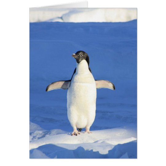 penguin happy dance hug card
