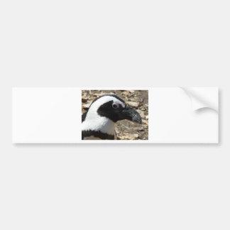 penguin head car bumper sticker