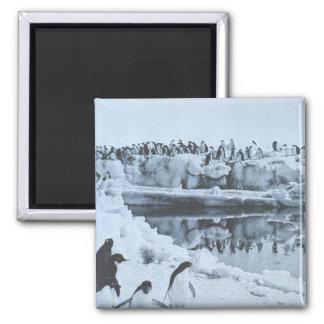 Penguin Herd 2 Inch Square Magnet