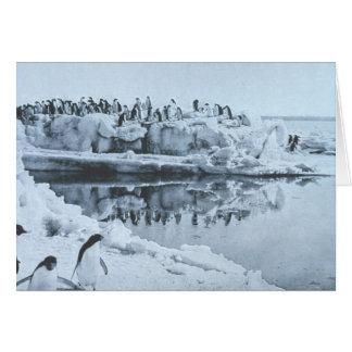 Penguin Herd Card