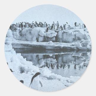 Penguin Herd Classic Round Sticker